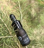 澳洲茶树精油在基地的实拍图